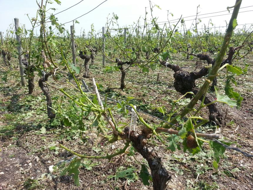 Au moins 300 hectares ont été ravagés au Nord-Est de Lesparre-Médoc - Radio France