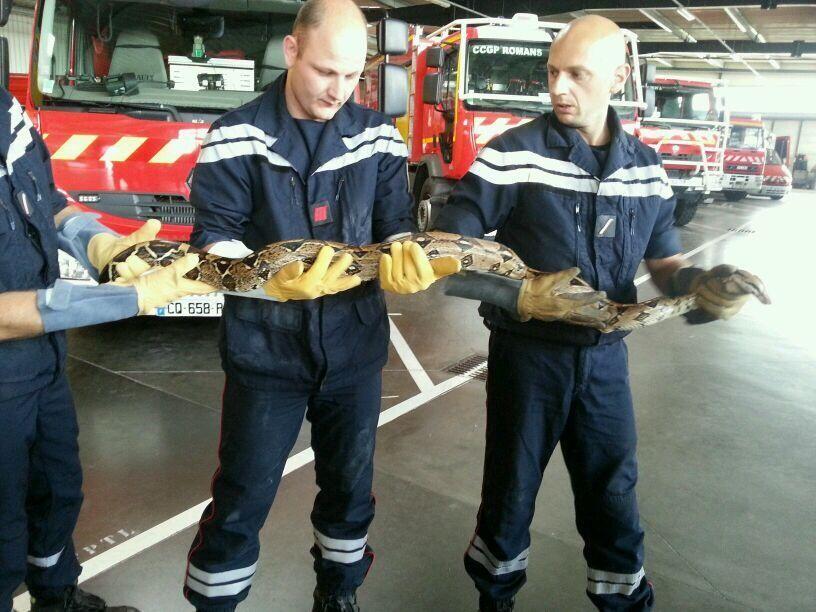 Photo de famille des pompiers de la Drôme avec le deuxième boa découvert à Bourg-de-Péage, le 3 juin 2014  - Radio France