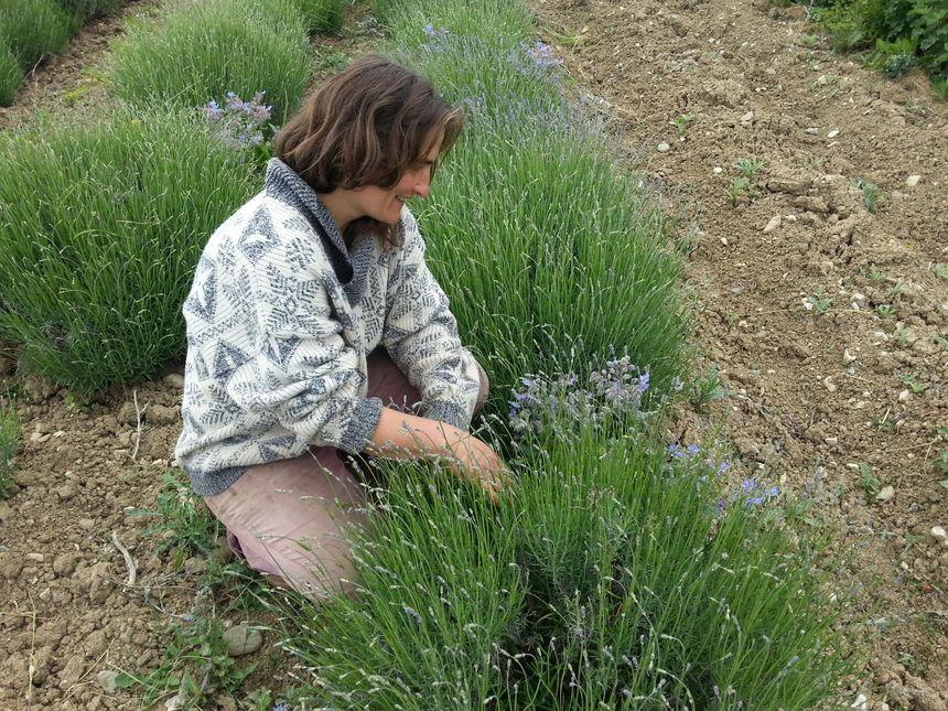 Plantamarine Fançoise Dupont à Monestier du perçy