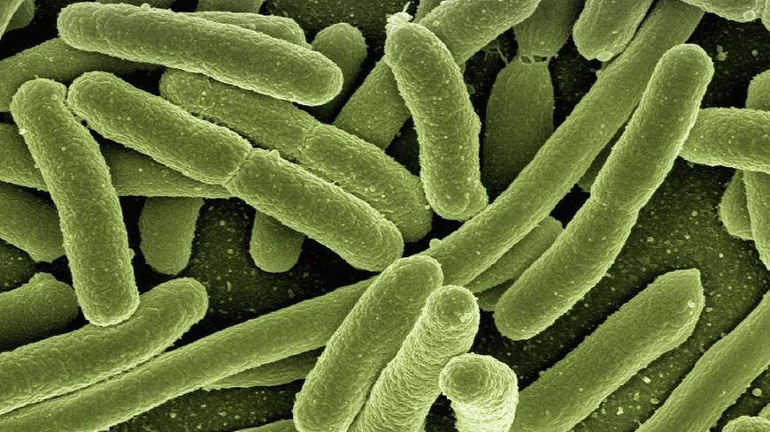 Bactérie. (illustration)