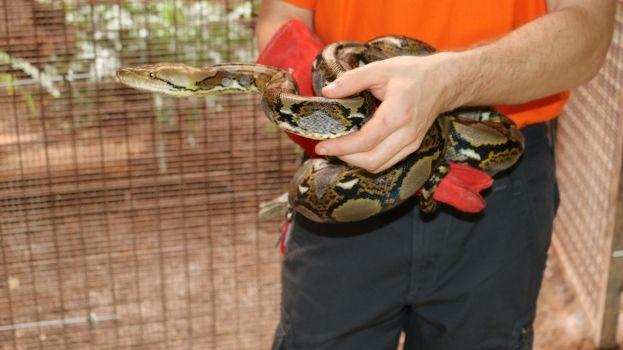 La ferme aux crocodiles s'agrandit à Pierrelatte et va nous faire adorer les serpents