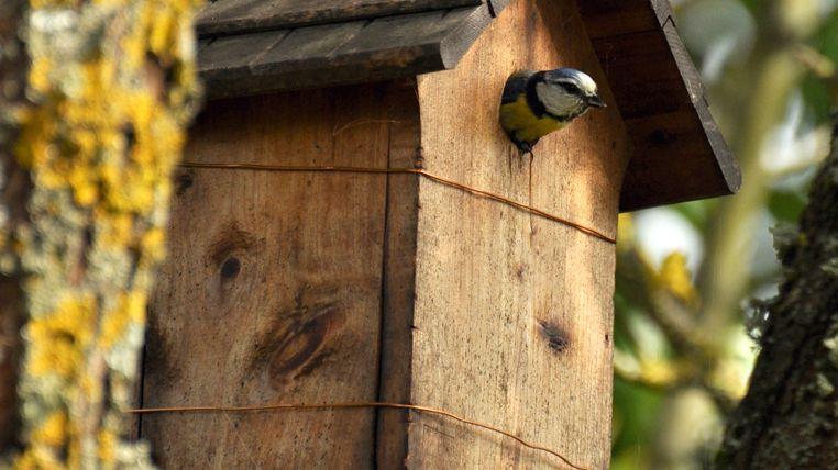 participez l enqu te de la ligue de protection des oiseaux devine qui vient nicher chez moi. Black Bedroom Furniture Sets. Home Design Ideas