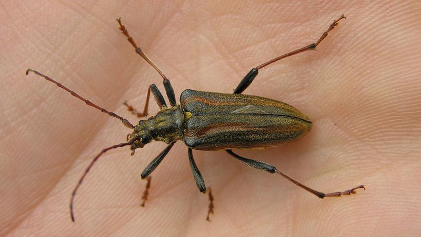 Insecte Dans Le Bois - Invasion d'insectes au Musée d'art et d'histoire de Granville