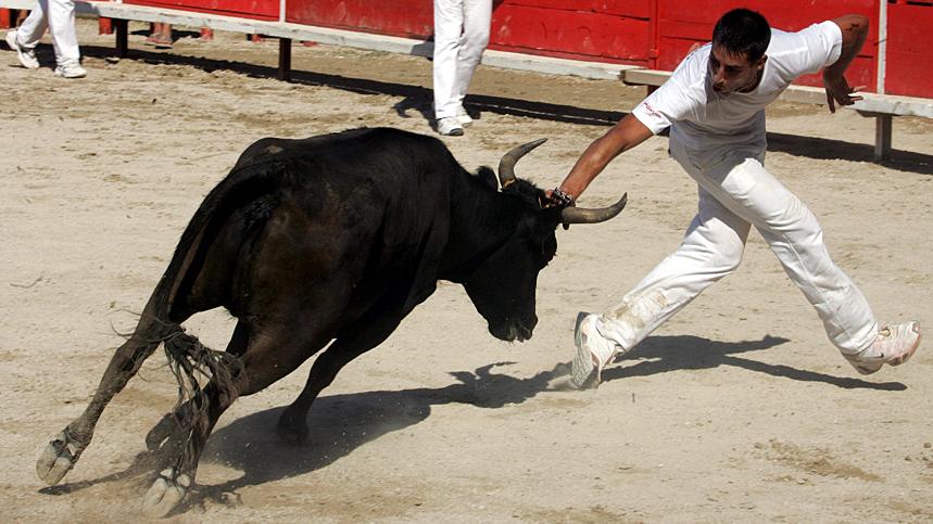 Un raseteur face au taureau