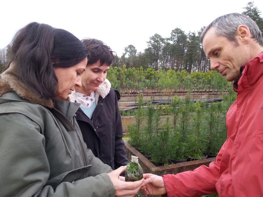 Annie Raffin, Céline Meredieu et Frédéric Danjon, chercheurs à l'Inra - Radio France