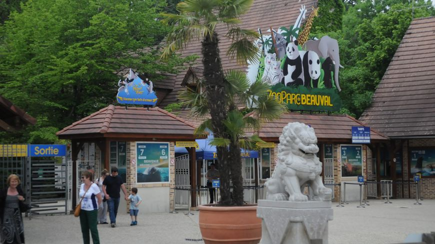 Zoo de beauval une centaine de postes pourvoir for Chambre zoo de beauval