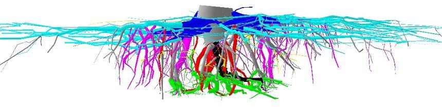 Exemple de système racinaire de pin maritime modélisé en 3D - Radio France