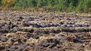 reboisement forêt des Landes
