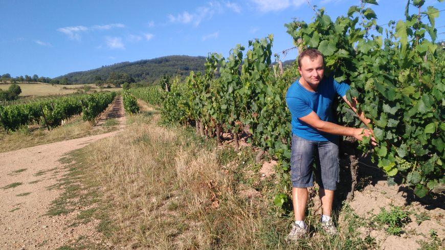 A Villemontais, grêle et gel oblige, Antoine Néron imagine faire à peine 40% de sa production habituelle de vin