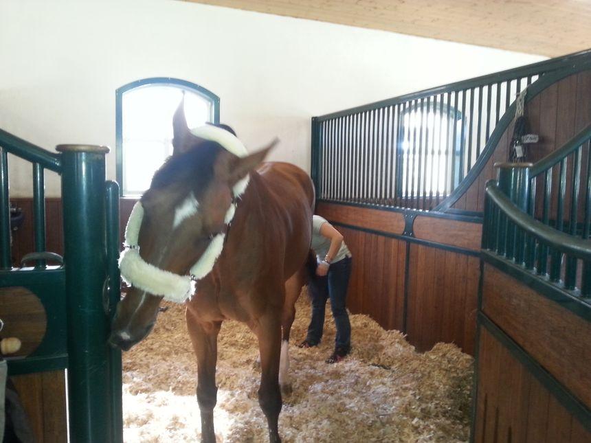 En attendant l'entrée dans le concours, les chevaux les plus performants d'Europe sont bichonnés dans des boxes luxueux. - Radio France