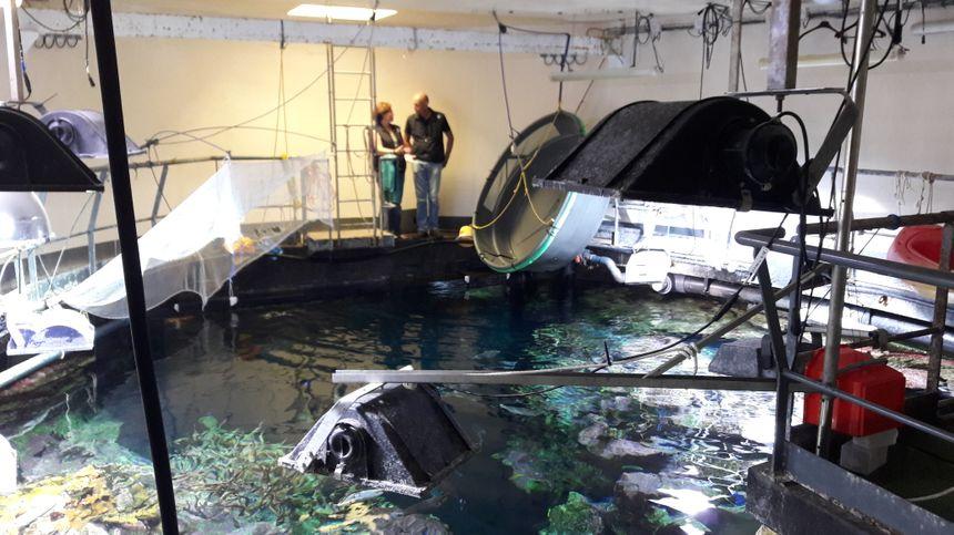 Le grand aquarium abyssal, reproduction d'un récif polynésien, vu du dessus... - Radio France