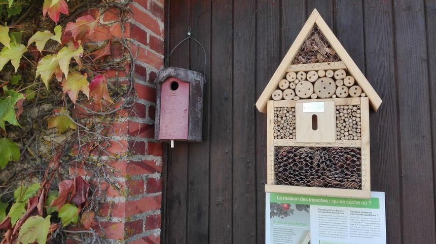 NIchoirs à mésanges, hôtels à insectes : les Timmerman s'entourent des insectes pour combattre les nuisibles qui s'attaquent aux pommiers - Radio France
