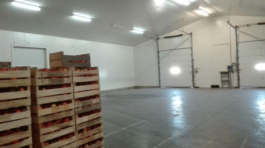 Après la récolte, les chambres froides de l'exploitation seront pleines de pommes.  - Radio France
