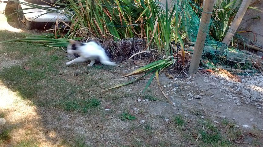Des chats errants très furtifs à Quimperlé - Radio France