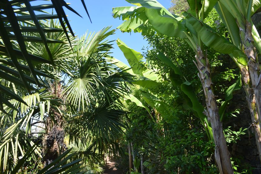 le jardin exotique  de la Roque Gageac - Radio France