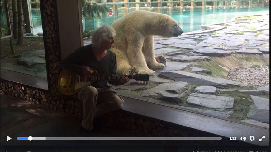 vid o louis bertignac chante une chanson l ours blanc du zoo de la fl che. Black Bedroom Furniture Sets. Home Design Ideas