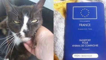 Moon Unit alors qu'elle était encore en France, avec son passeport pour l'Angleterre