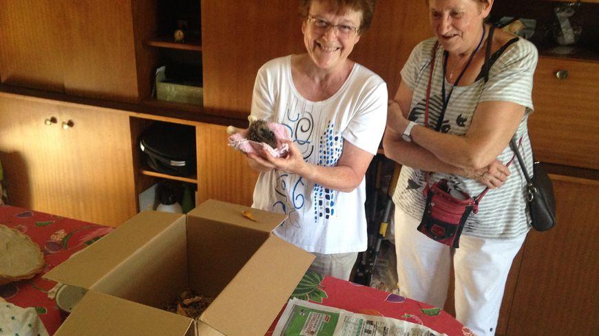 Noëlle et Anne-Marie ont récupéré trois hérissons dans le jardin à La Cabane