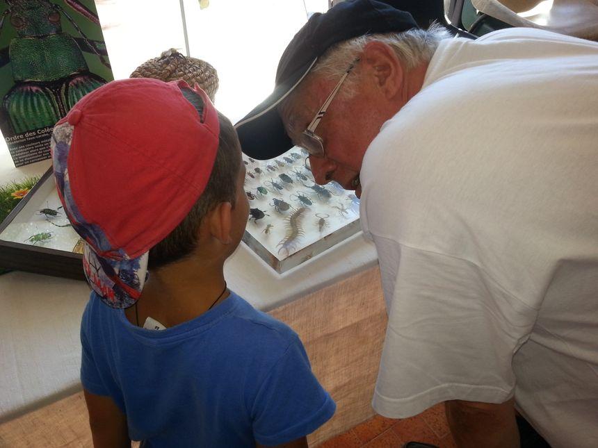 La cité des insectes de Nedde a délocalisé une partie de sa collection pour les enfants - Radio France