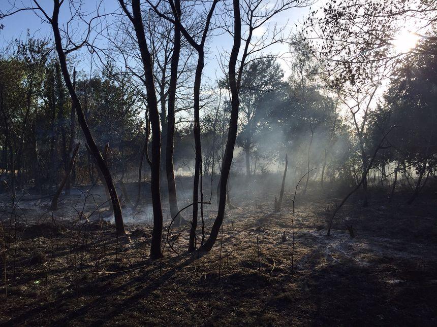 La forêt encore fumante - Radio France