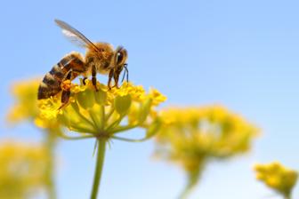 Monde des abeilles