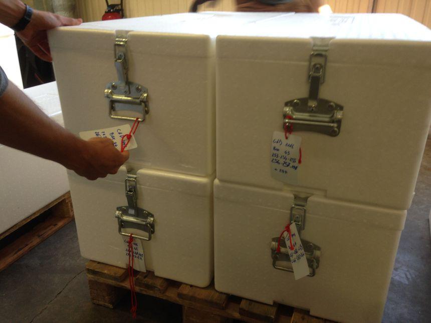 Les échantillons de glaces ont été numérotés pour faciliter le travail des chercheurs. - Radio France
