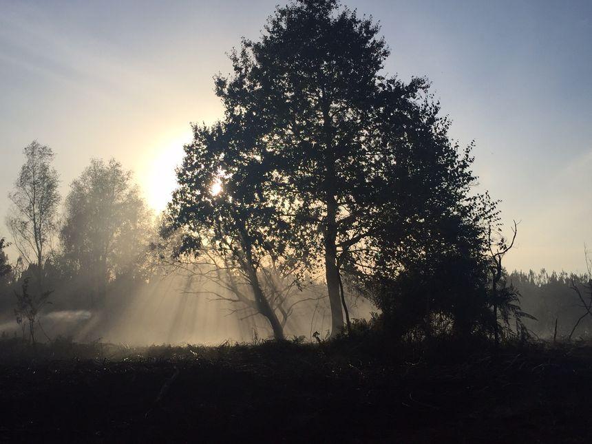 Le soleil se couche dans la forêt après les flammes - Radio France