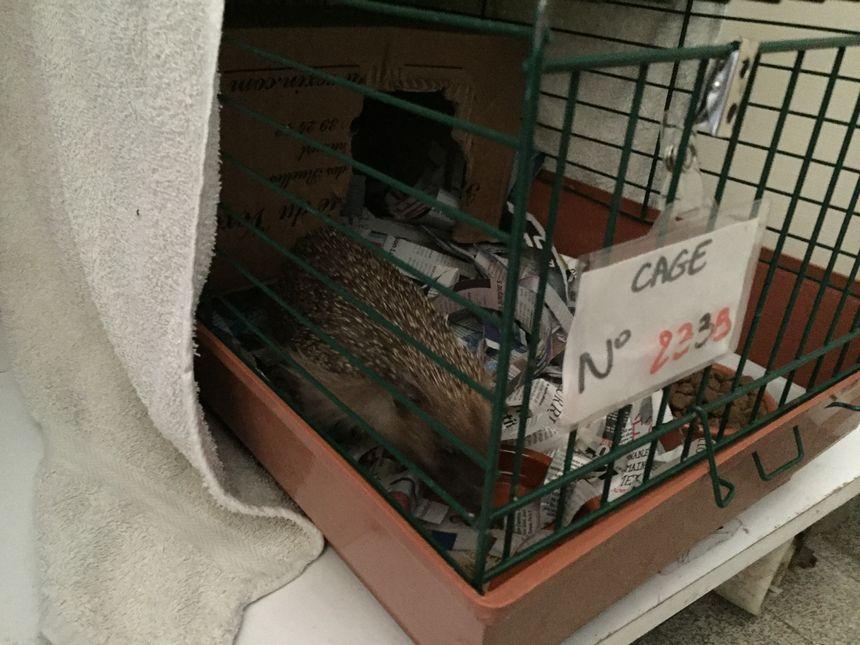 Le refuge a surtout besoin de ce type de cage, avec des barreaux très resserrés. - Radio France