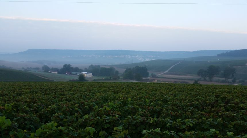 France bleu en direct du vignoble de Champagne pour les vendanges - Radio France