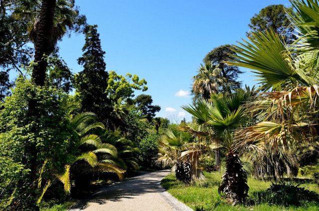 Jardin Botanique de la Villa Thuret à Antibes  - Radio France