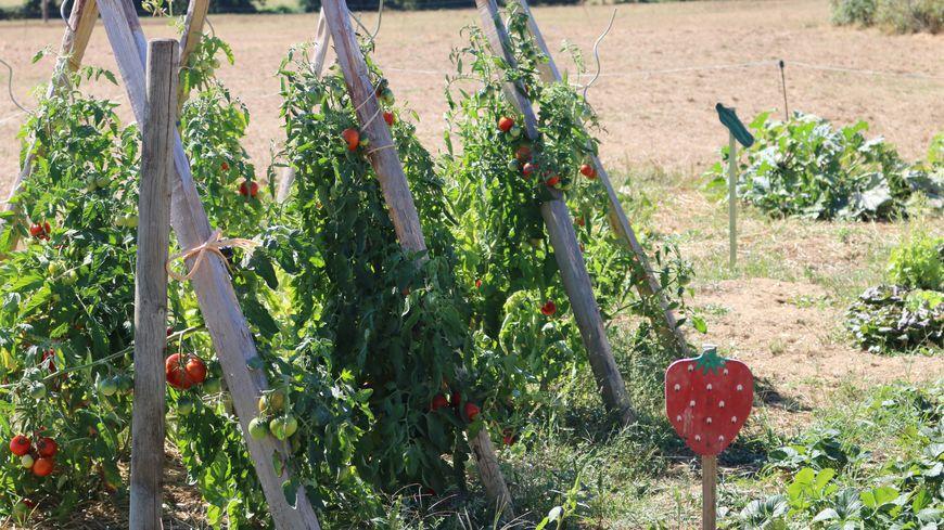 L'agriculture biologique a fait un bond cette année en Mayenne