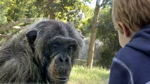 Zoo singe et enfant