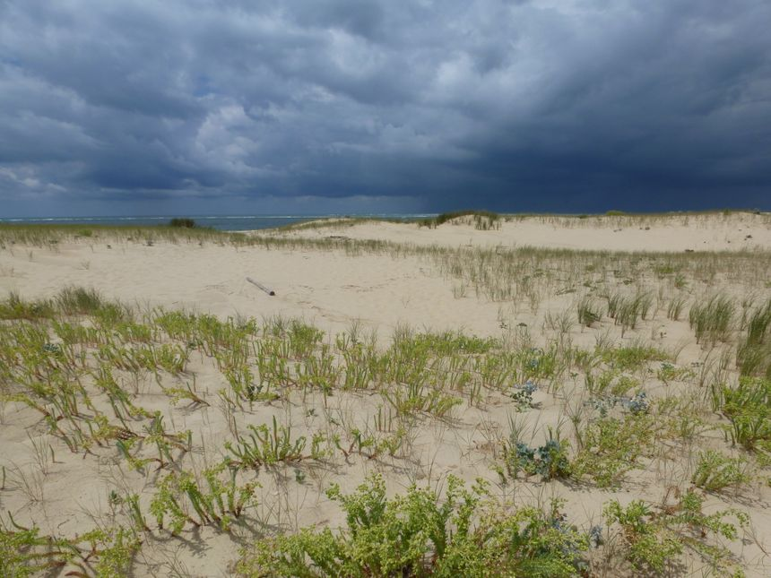 Le banc d'Arguin avec vue sur l'océan (au loin) - Radio France