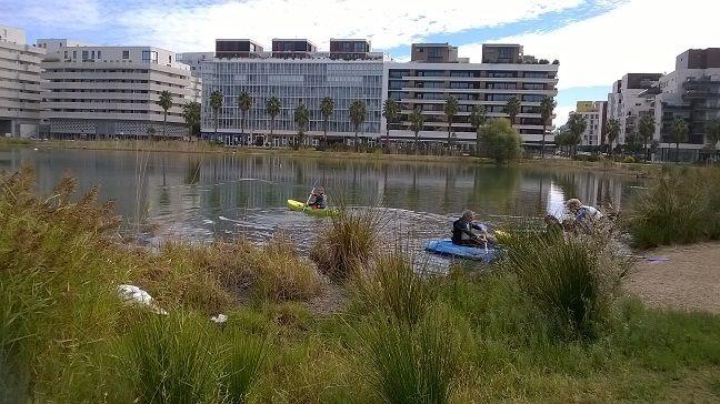 sauvetage du cygne en kayak sur le bassin Jacques Cœur de Montpellier - Aucun(e)