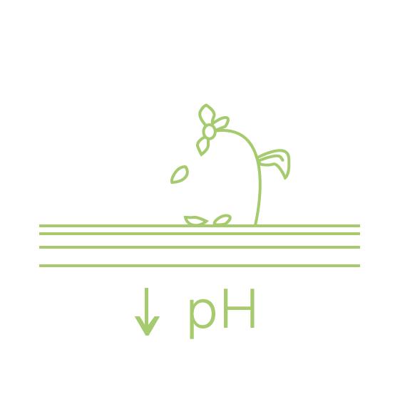 Impacte ambiental: acidificació dels sòls
