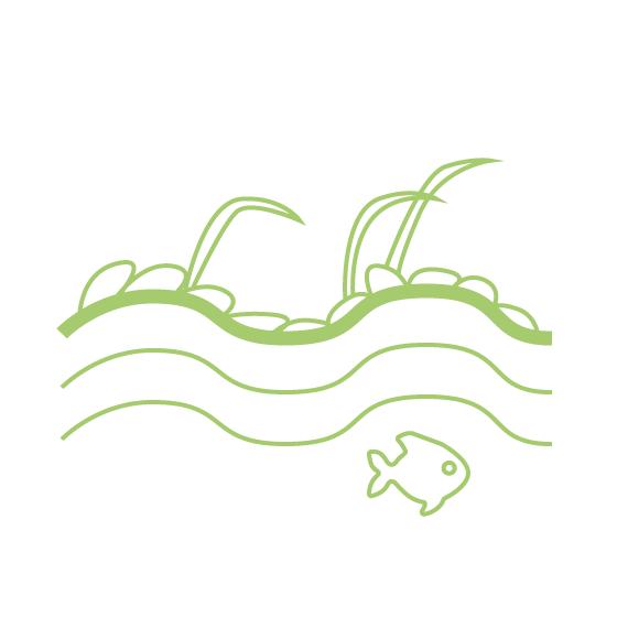 Impacte ambiental: eutrofització de l'aigua