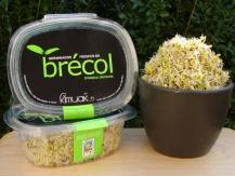 Germinado tipo II (brócoli...)
