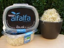 Germinado de alfalfa 45g
