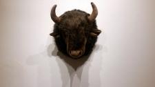 Cabeza de búfalo peluche