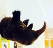 Cabeza trofeo rinoceronte peluche