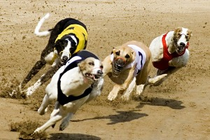 Night at The Dogs & Dinner for my Dublin Stag Do | Maximise Stag Weekends