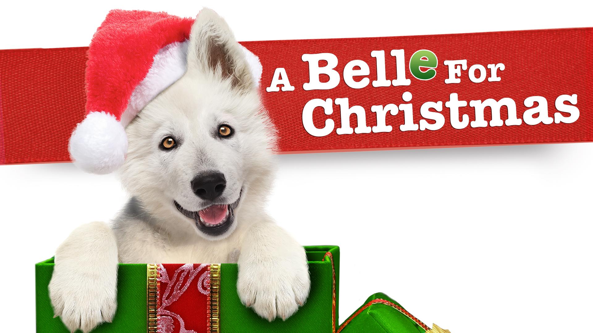 Red hundehvalpen før jul