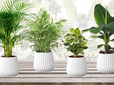 Set van 4 trendy kamerplanten