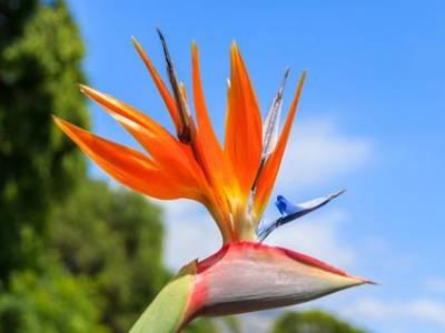8 daagse singlereis Veelzijdig Madeira
