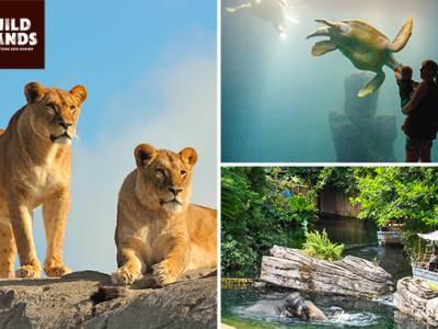 Dagentree voor WILDLANDS Adventure Zoo Emmen
