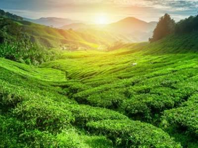 19-daagse rondreis Parels van Sri Lanka
