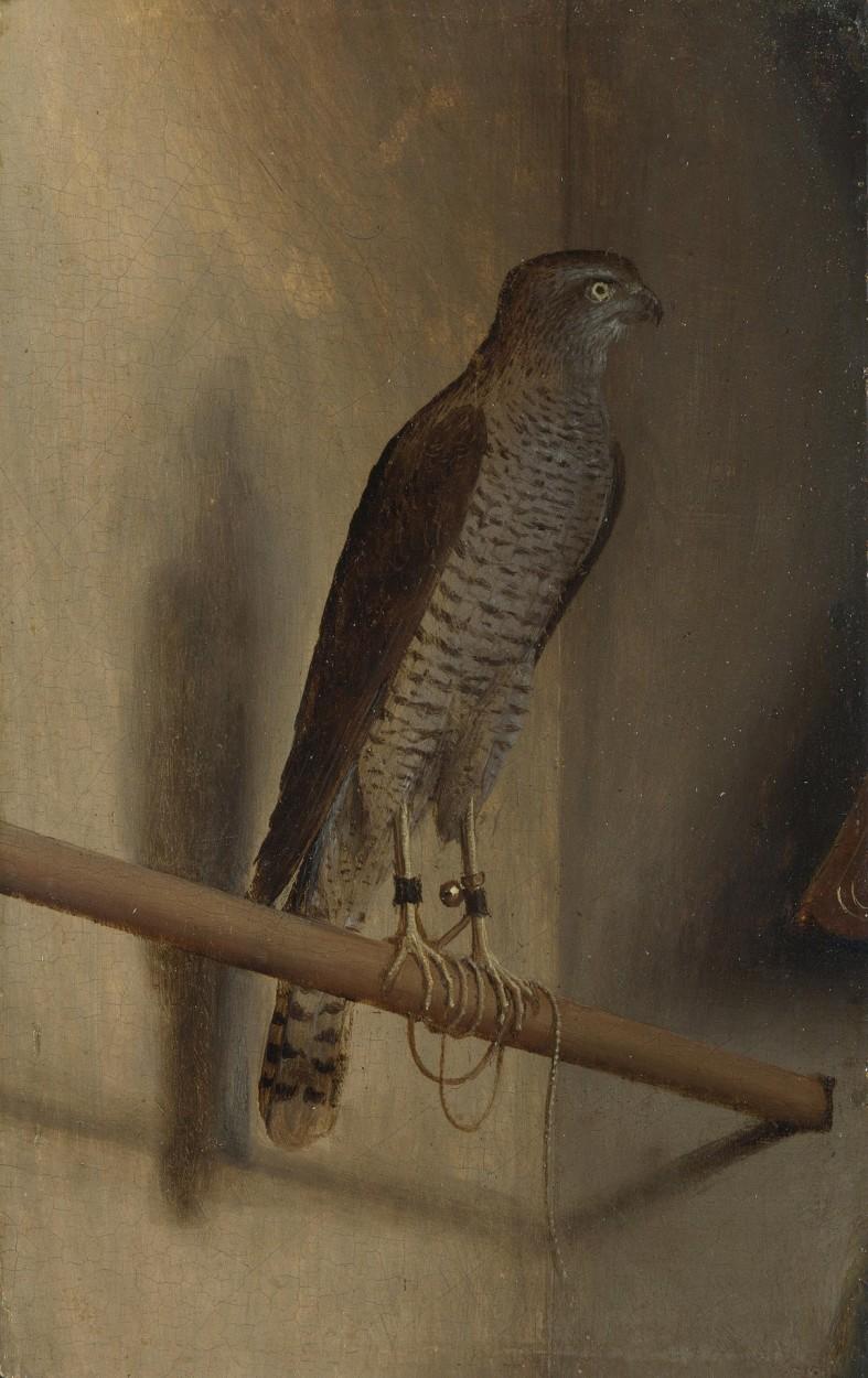 A Sparrowhawk by Jacopo de' Barbari via DailyArt app, your daily dose of art getdailyart.com