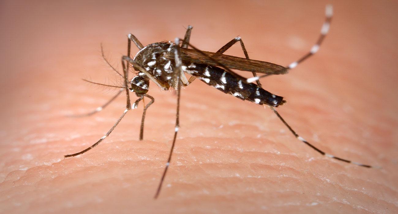 7 oggetti per tenere lontane le zanzare e vivere sereni l'estate