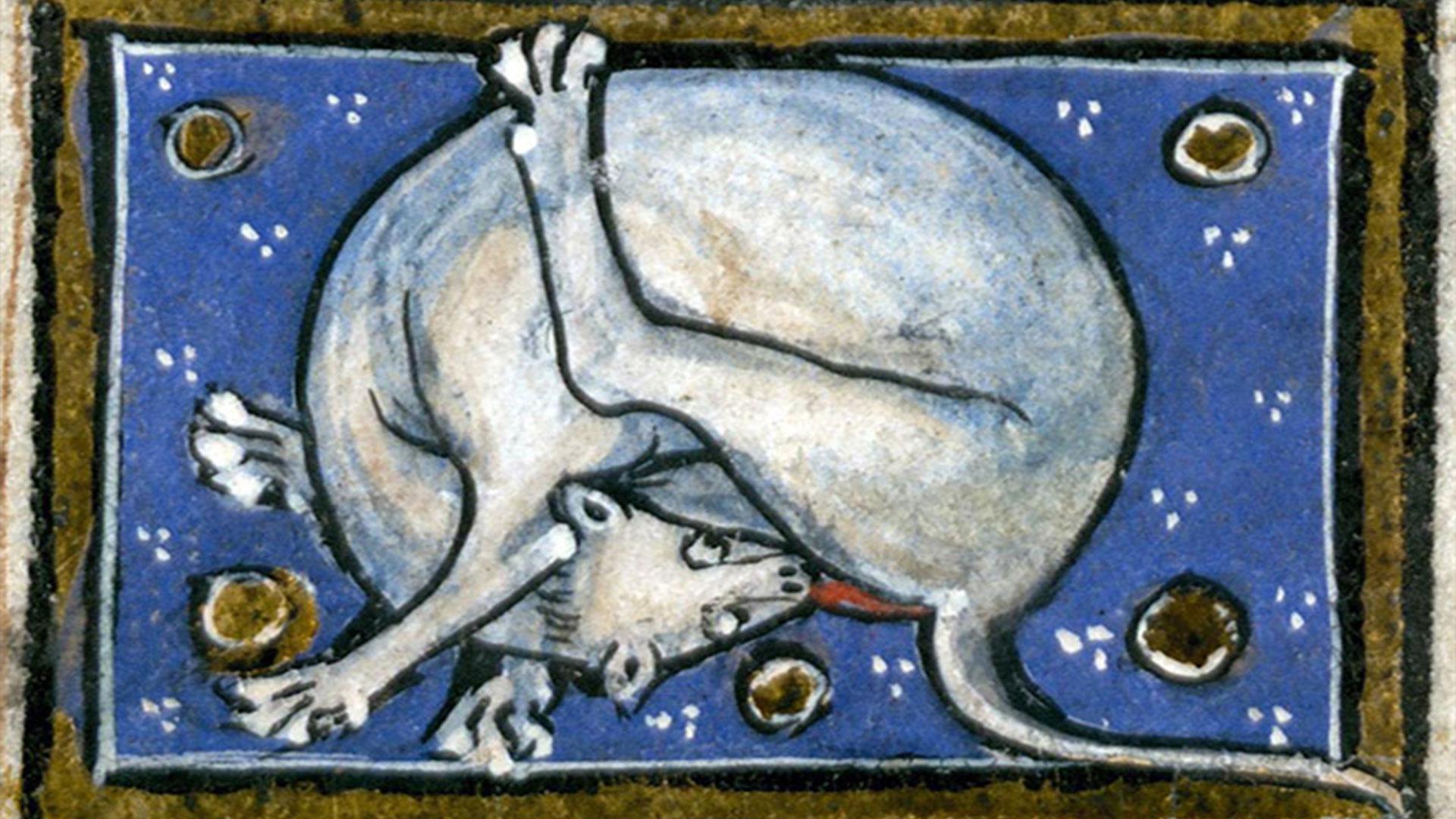 Gatti che si leccano il sedere nell'arte medievale