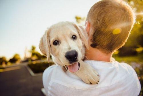 predere un cucciolo